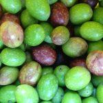 olive tirana La Maison de la Mozzarella