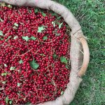 Ribes Rosso La Maison de la Mozzarella